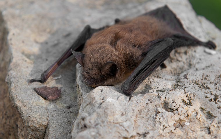 a little bat on a rock