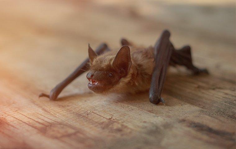 a little bat in a house