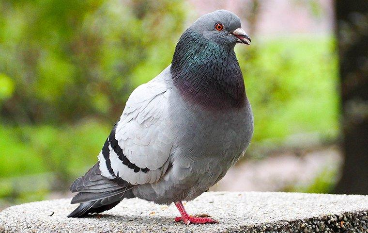 pigeon perched on a stone bench