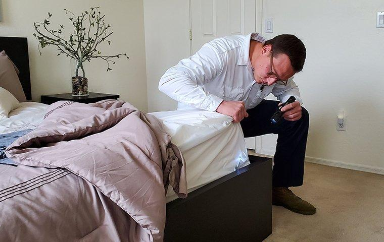 a pest control service technician inspecting a bedroom for bed bugs