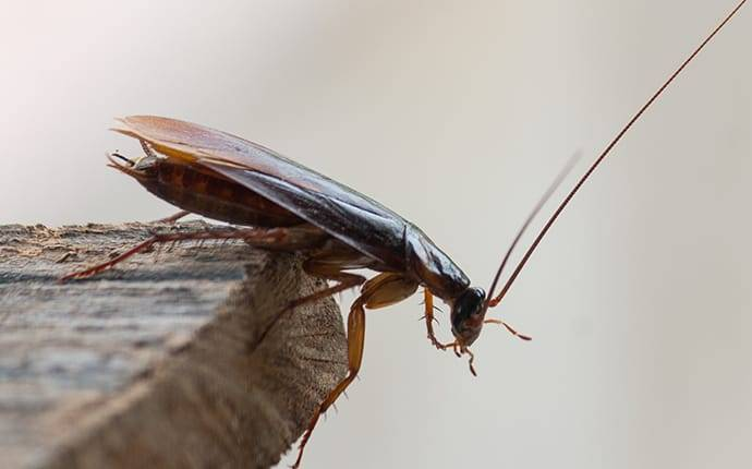 close up of cockroach in home