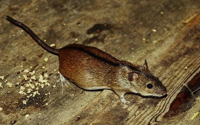 mouse crawling in basement