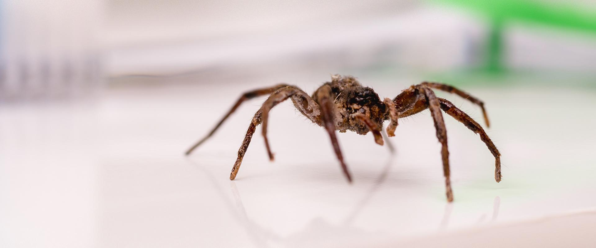spider on a counter