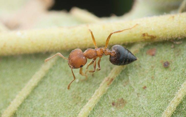 an ant on a plant in a pineville home garden