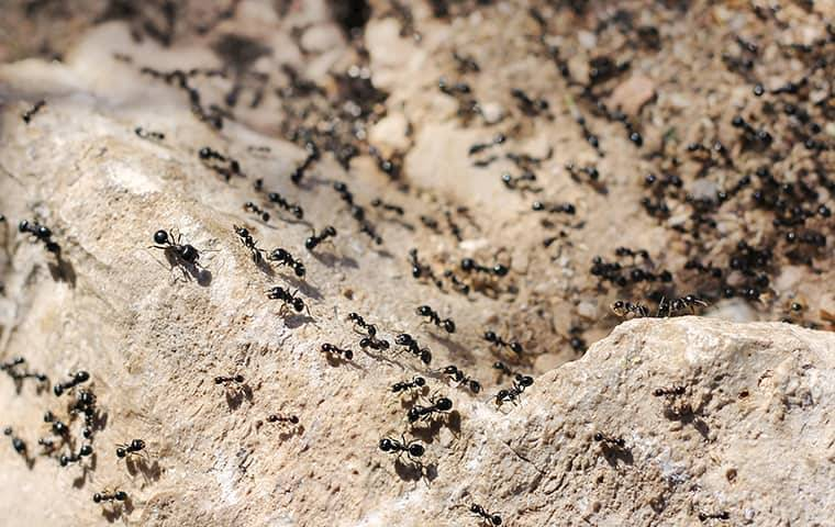 ants crawling on a rock