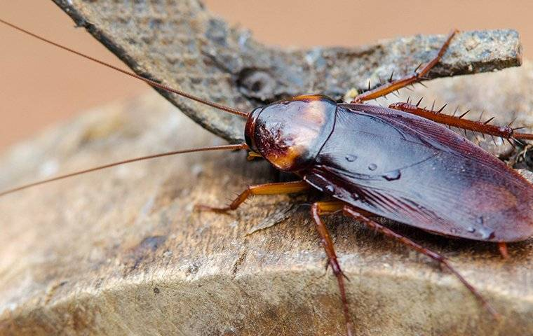 cockroach on wood in a shed