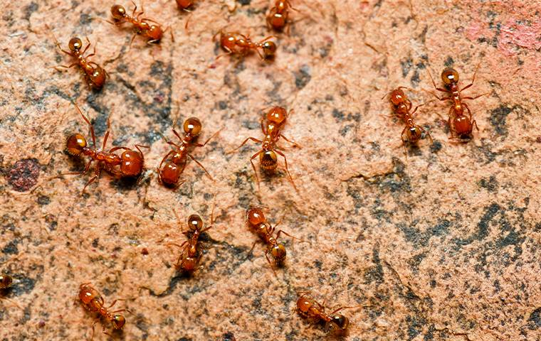 several fire ants outside a home