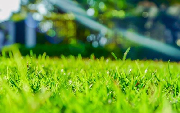 a close up of a green lawn