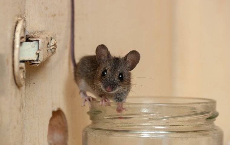 a mouse in a cupboard
