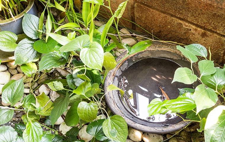 standing water in a plant pot