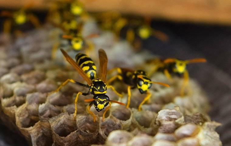wasps crawling on their nest