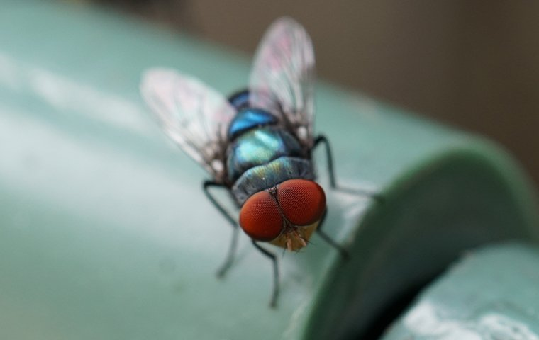 a bottle fly on a pipe