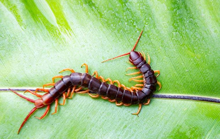 centipede on green plant