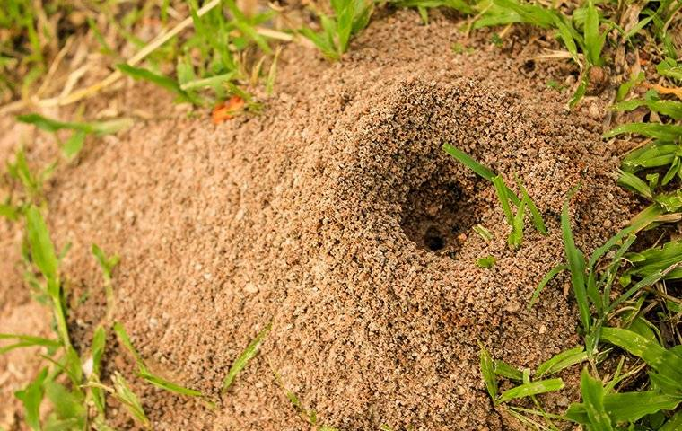 fire ant hole in yard