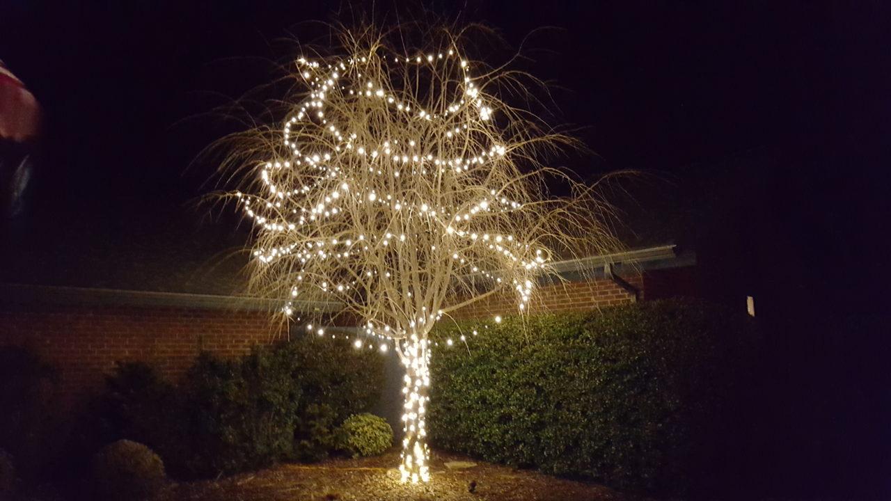 a back yard tree with christmas lights