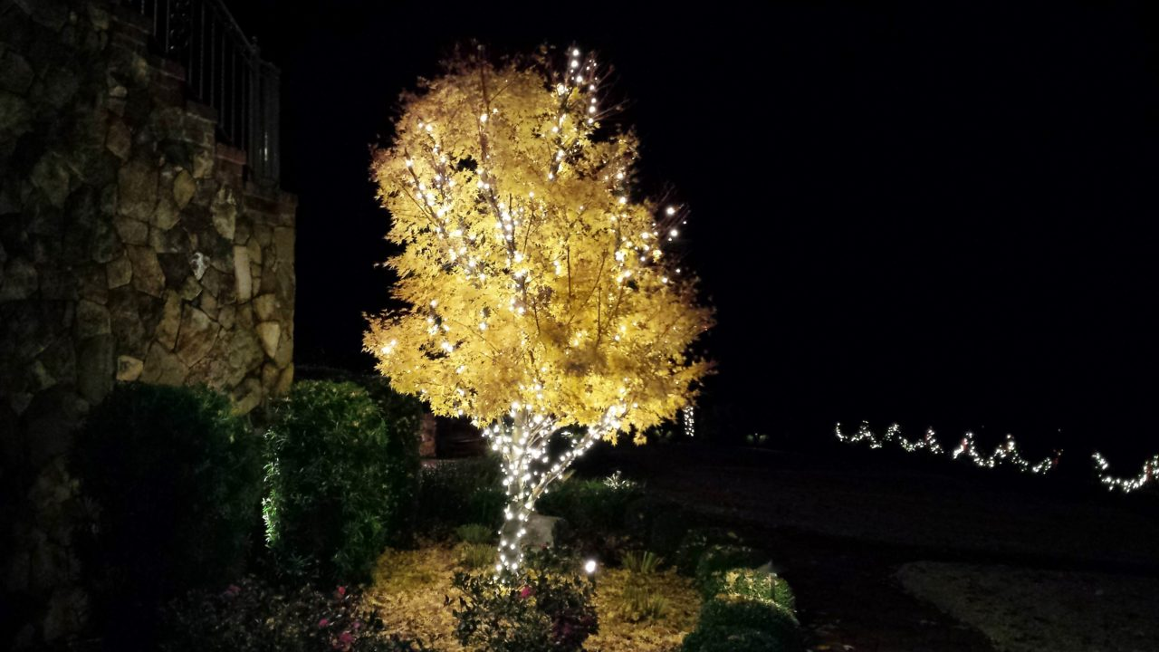 a front yard tree with christmas lights