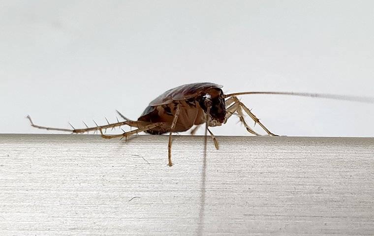 a german roach in a kitchen