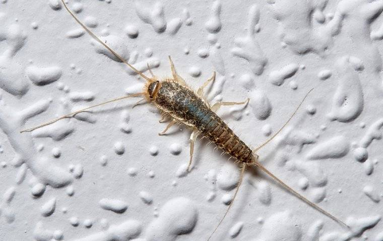 silverfish on a bathroom wall