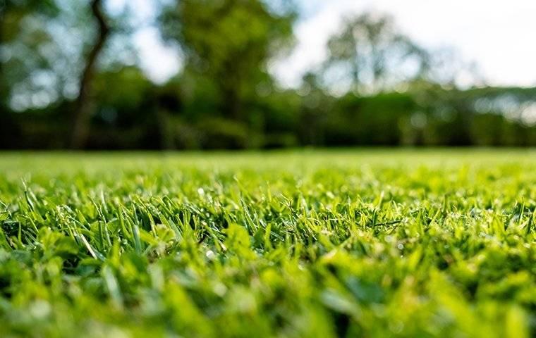 a healthy green lawn in mount holly north carolina