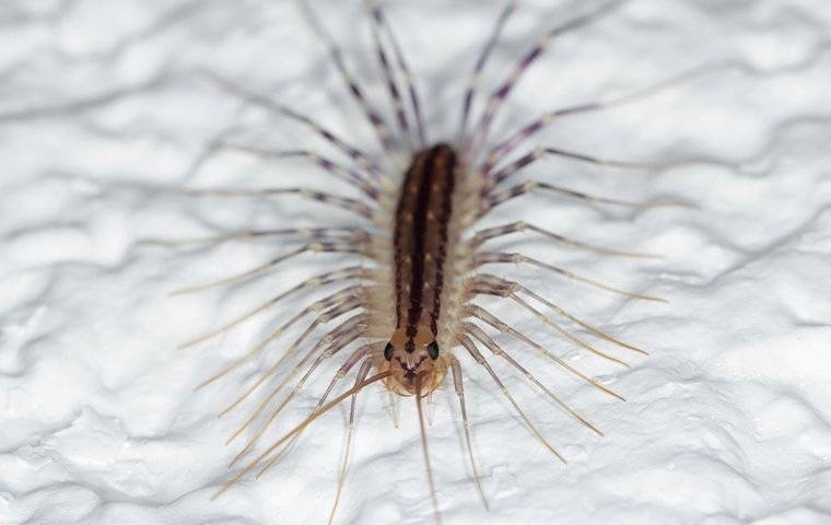 house centipede crawling on bathroom shower
