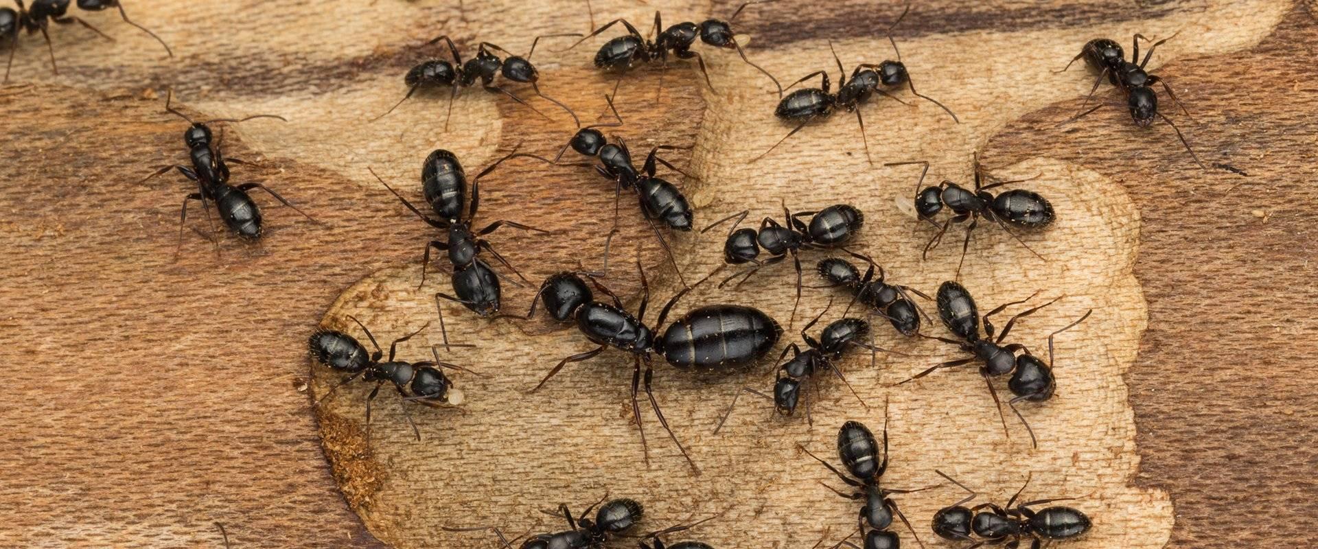 ants up close