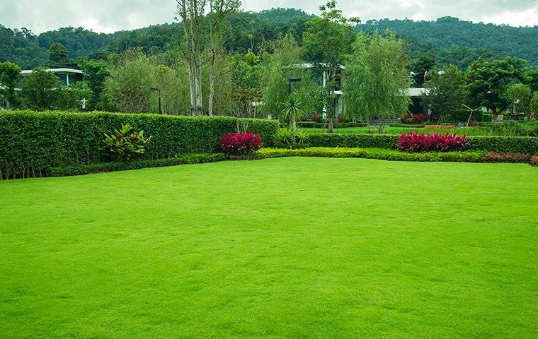 a beautiful healthy back yard