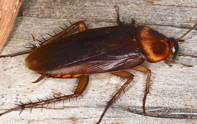cockroach crawling indoors