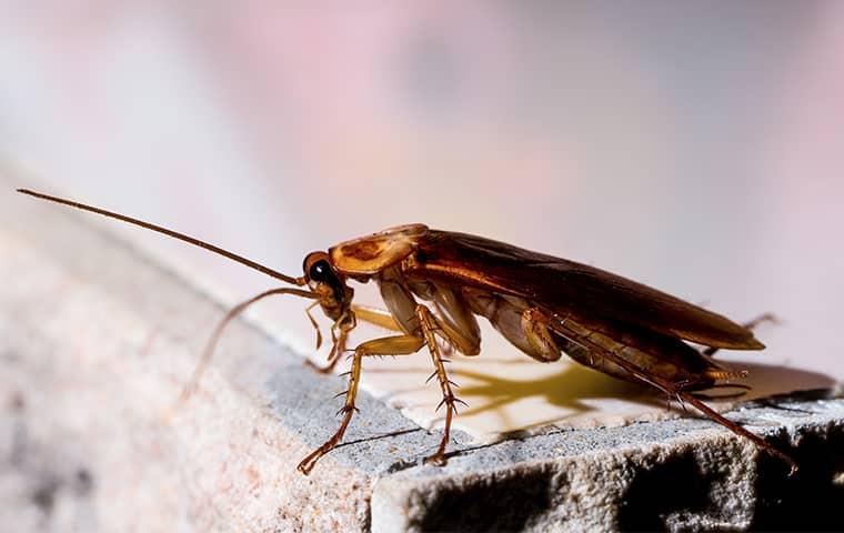 cockroach on cinderblock