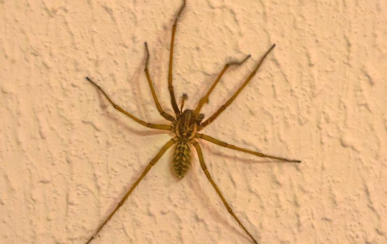 spider on a wall
