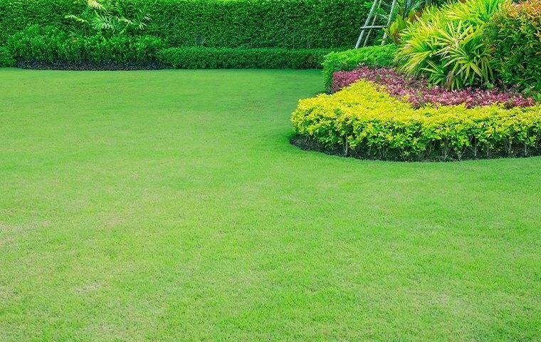 pineville lawn care service to prevent pests