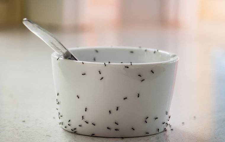 ants crawling on a dish in a kitchen