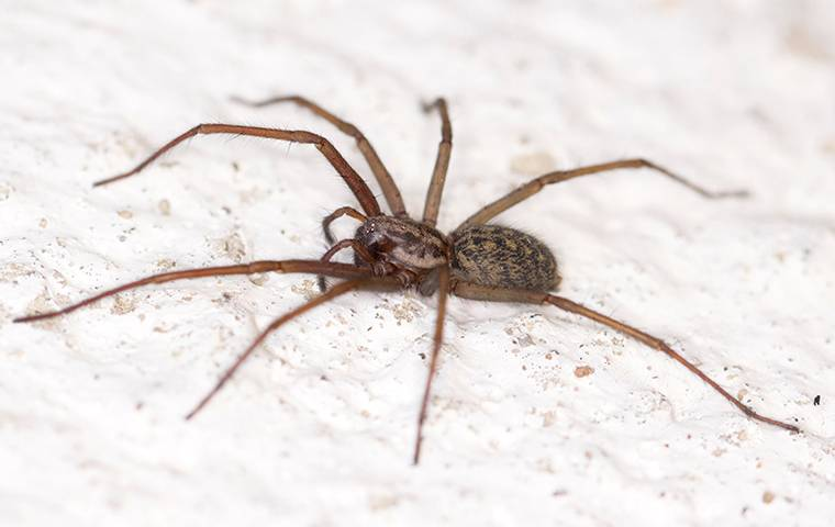 a house spider on a bed sheet