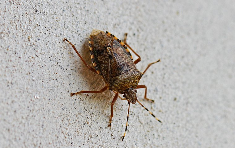 a stink bug crawling on a wall in a home