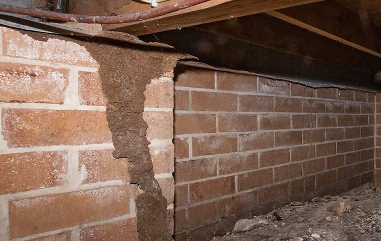 termite damage in basement