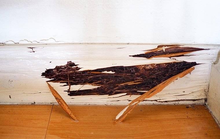 termite damage in wood