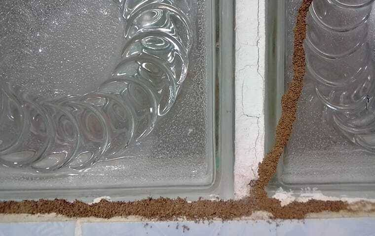 signs of extantive termite damamge and tubing