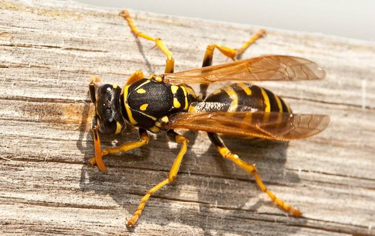 a wasp crawling on a wooden picnic table