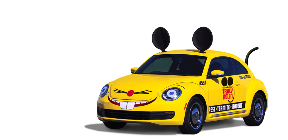 truly nolens yellow mouse car