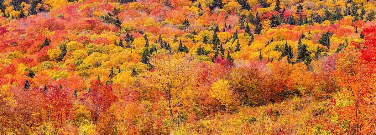 Tim Pond Road fall foliage