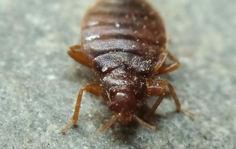 a bed bug infestation on furniture