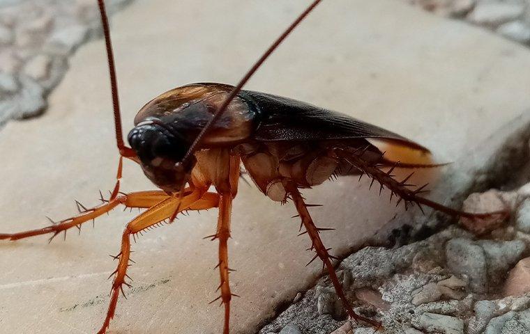 a cockroach indoors on floor tile