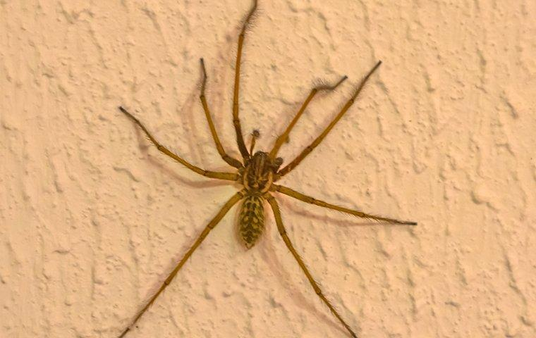 house spider on a wall