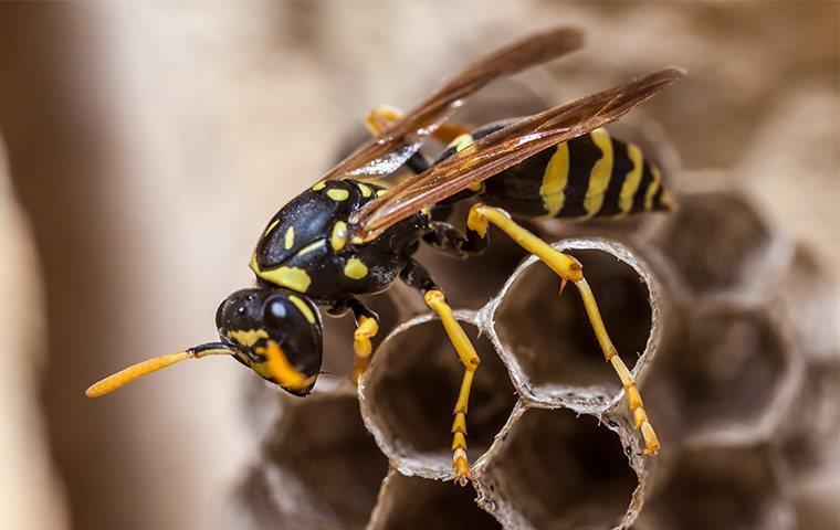 wasp crawling on nest