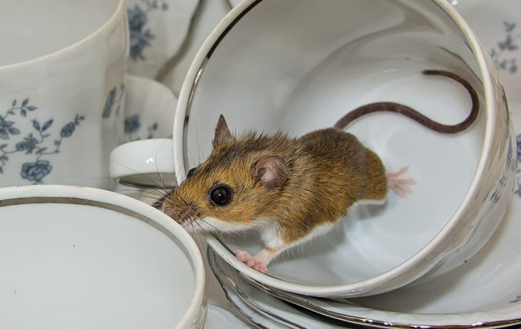 a mouse crawling in a tea cup