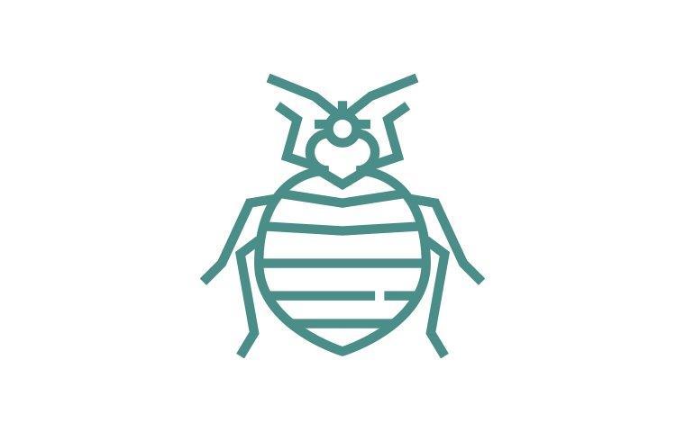bed bug icon