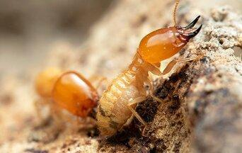 termites crawling on a wall