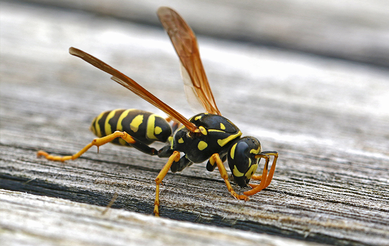 a wasp crawling outside of a home in houston texas
