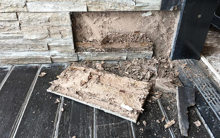 an exterior wall with termite damage at a home in texas