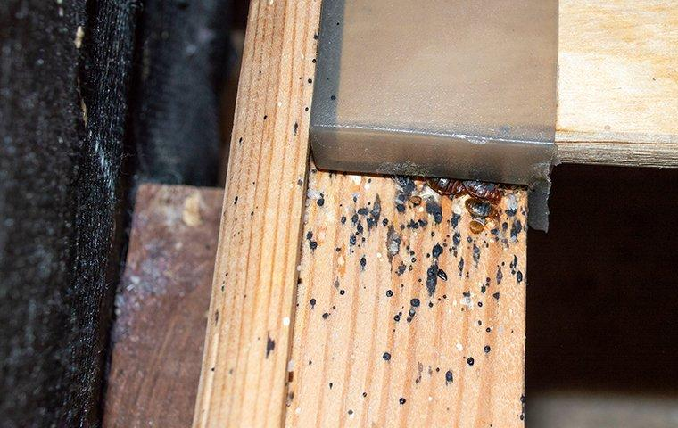 bed bug infestation in a head board