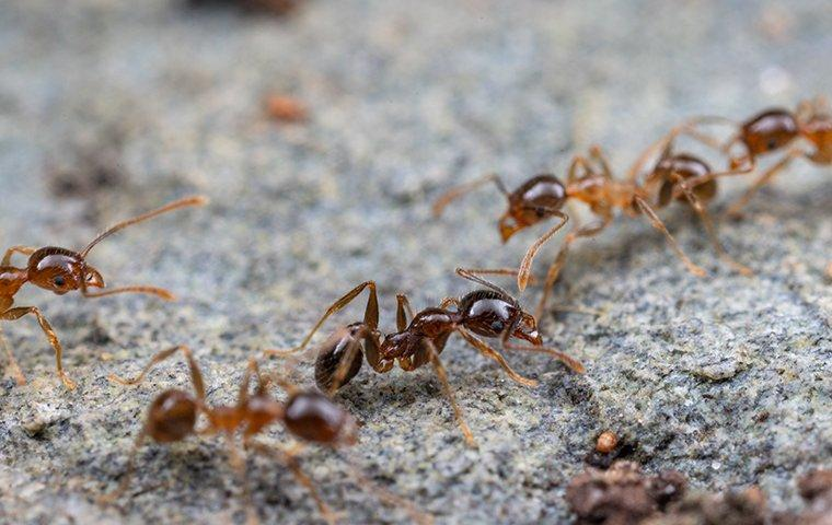 several ants crawling on the ground